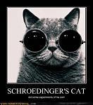 demotivational schroedingers cat